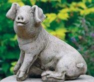 Med Pig A