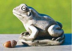 Midi Frog