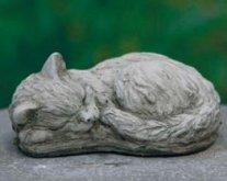Midi Cat