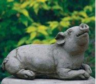 Med Pig D