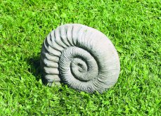 Small Ammonite